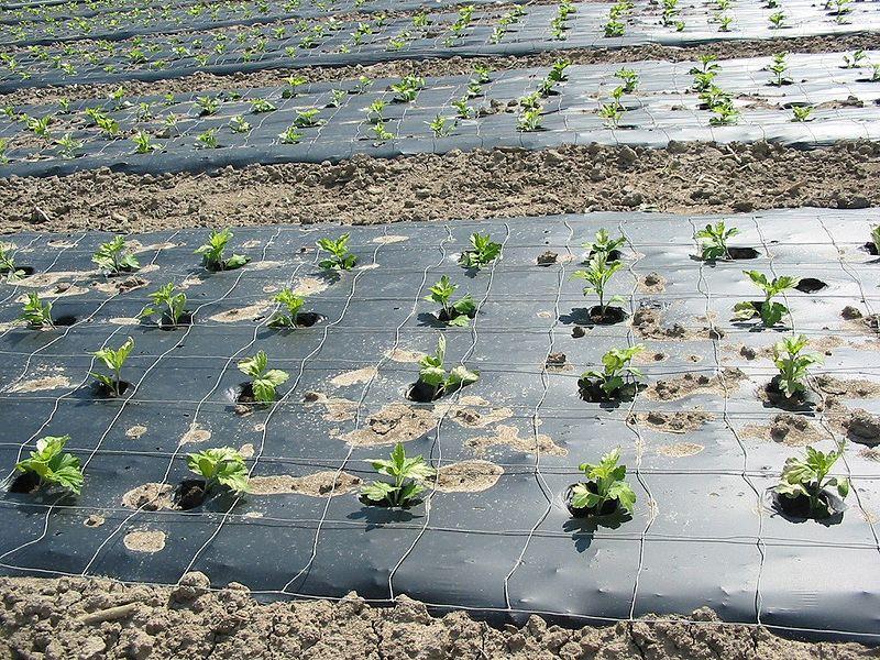 مالچ کشاورزی پلاستیکی فیلم پوشش دهی