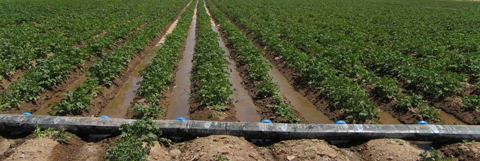 لوله های آبیاری انعطاف پذیر یا هیدروگیت شرکت رخ پلاستیک توس