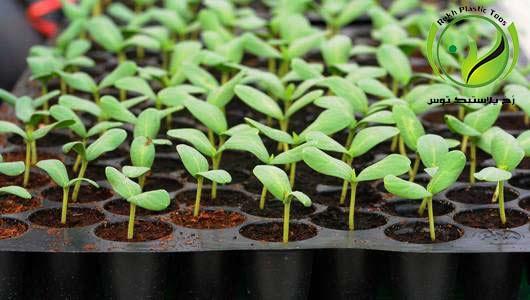 seedling tray سینی نشا رخ پلاستیک