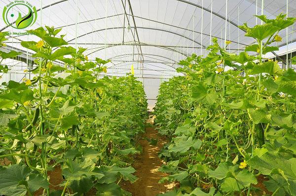 توسعه گلخانه کشاورزی