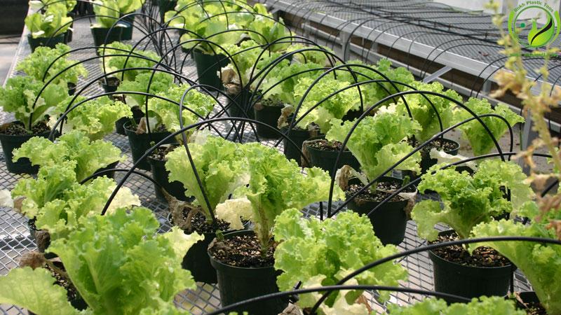 آبیاری گلخانه greenhouse irrigation