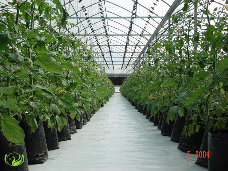 گلخانه هیدروپونیک گروبگ