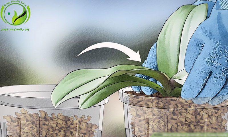 روش تکثیر کشت گلخانه رخ پلاستیک