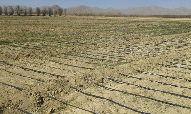 عبور نوار تیپ از بین مرزبندی های مزرعه و تثبیت آن ها در زمین