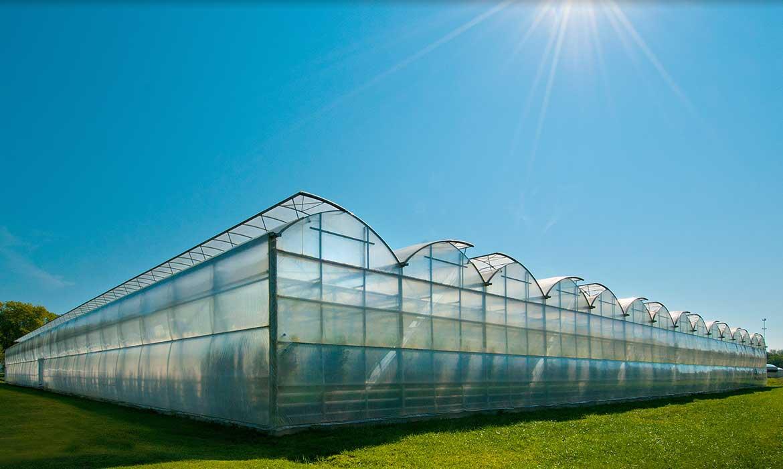 گلخانه تجاری, commercial greenhouse