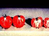 کمبود پتاسیم در گوجه فرنگی گلخانه ای